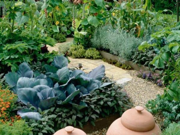Дизайн садового участка своими руками (30+ фото)