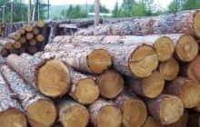 Как расчитать кубатуру леса