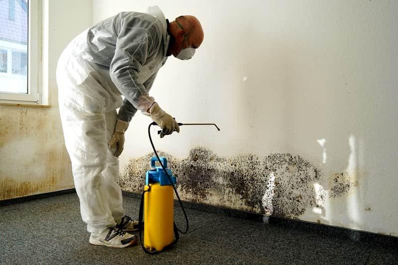 Борьба с грибком в квартире