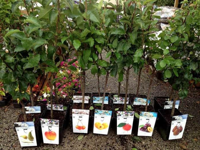 Как правильно выбрать саженцы для сада