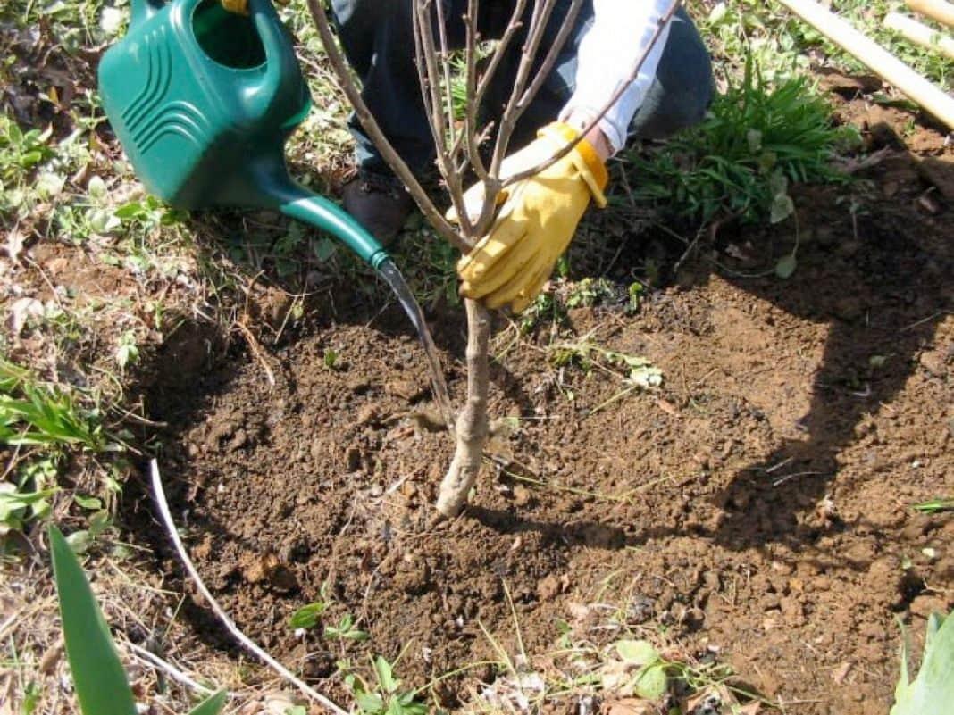 Весенняя высадка саженцев для сада