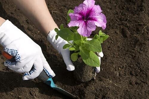 Обработка и посев семян