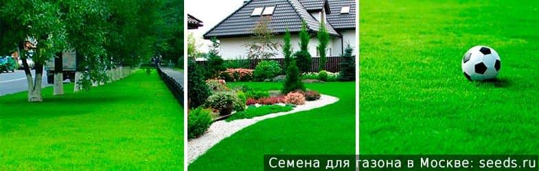 Купить газонную траву в Москве