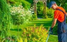 Озеленение участка – гарантия качества!