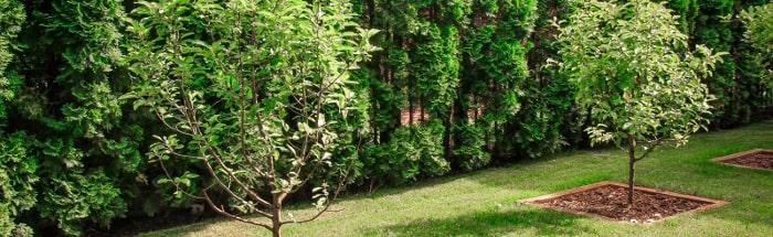 Нормы посадки деревьев на участке